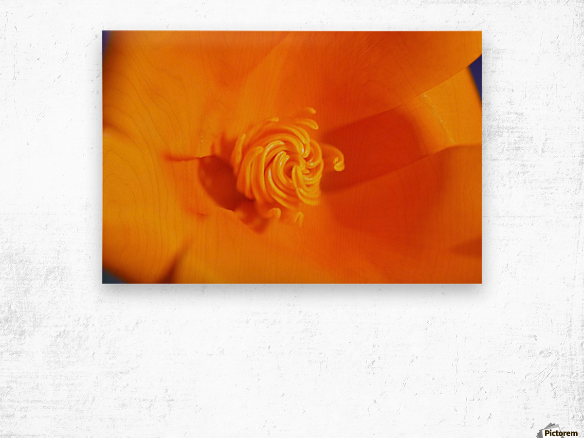 Close Up Of A Poppy Flower; Happy Valley, Oregon, Usa Wood print