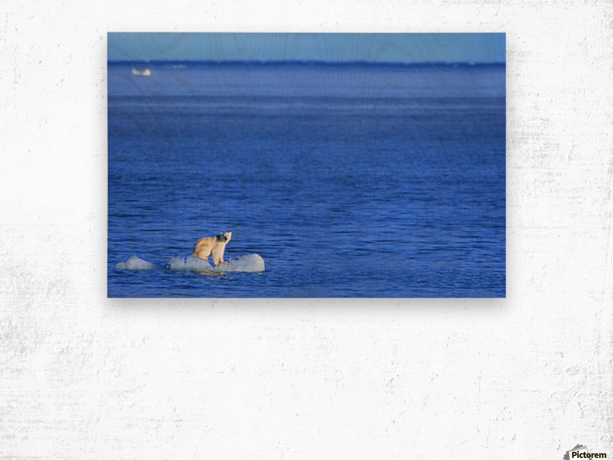 Polar Bear (Ursus Maritimus) Standing On A Piece Of Floating Ice; Coburg Island, Nunavut, Canada Wood print