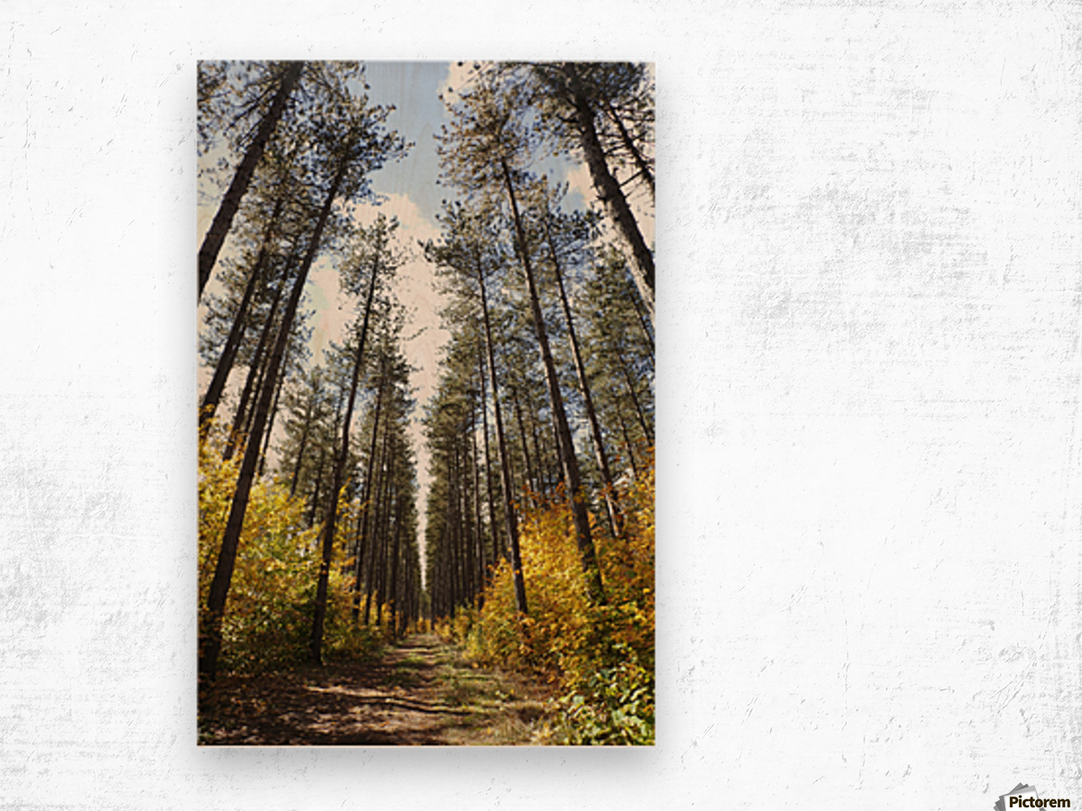 Path Through A Forest In Autumn; Sault St. Marie, Ontario, Canada Wood print