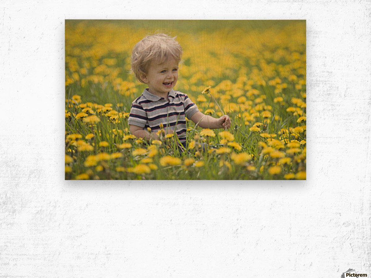 18-Month-Old Boy In Dandelion Field; Thunder Bay, Ontario, Canada Wood print