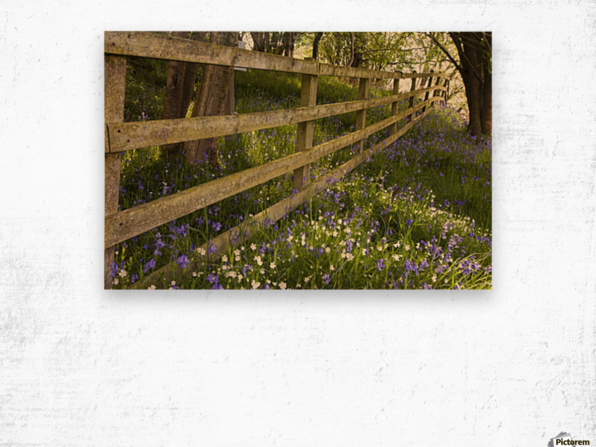 A Wooden Fence In A Forested Area With Blue And White Wildflowers On The Ground; Northumberland, England Wood print