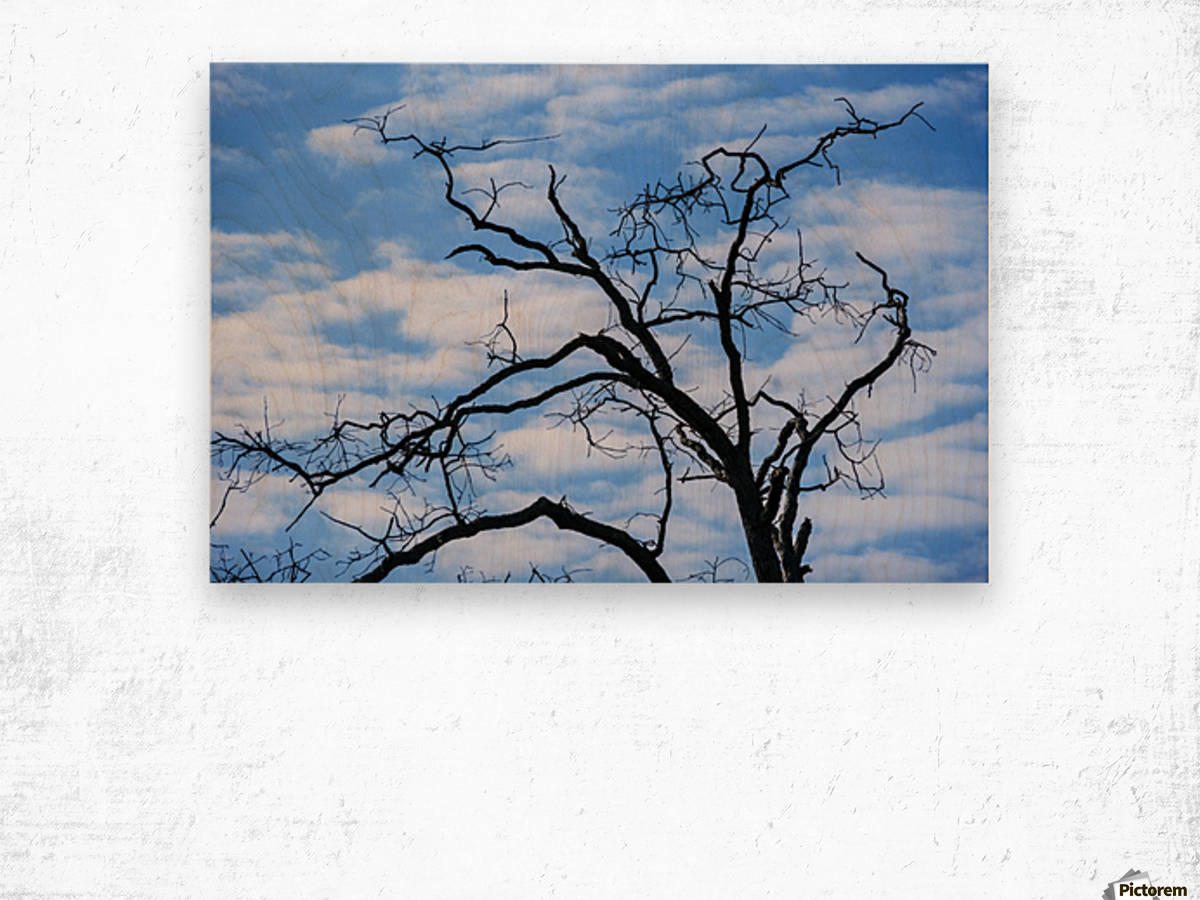 A dead tree is silhouetted against the sky; Tahlequah, Oklahoma, United States of America Wood print