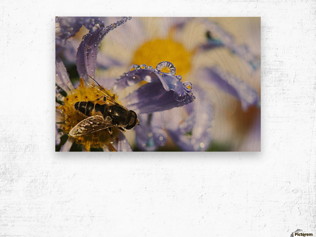 A Fly Rests On Aster Blossoms; Astoria, Oregon, United States Of America Wood print
