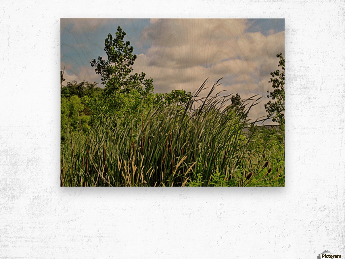 Cattails In The Wind Wood print