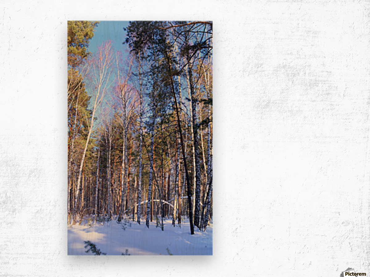 Winter. Forest. Shadow Wood print