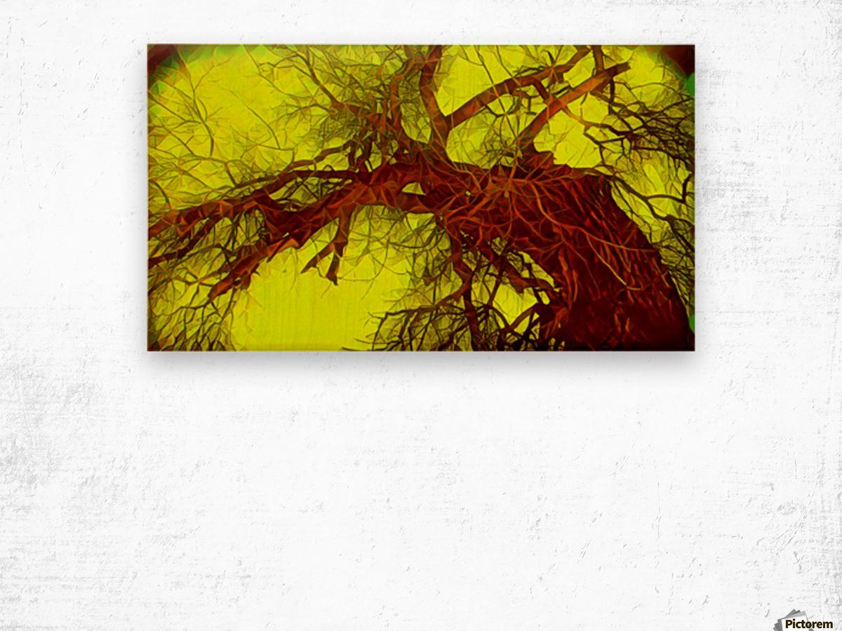 100yearoldtreeNUMBERtwo Wood print