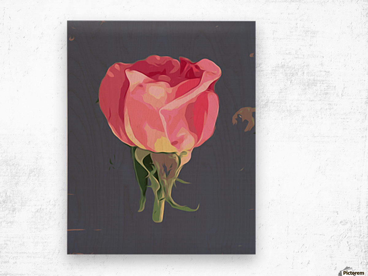 pink rose with grey background Wood print