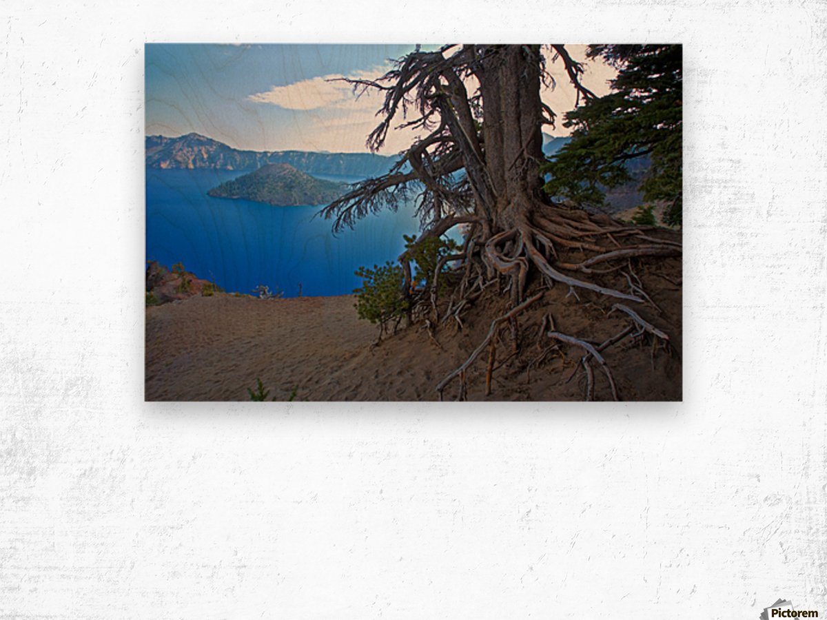Gnarled White Pine overlooking Crater Lake Aug 2015 Wood print